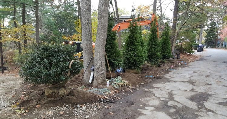 Tree Planting and Transplanting Services