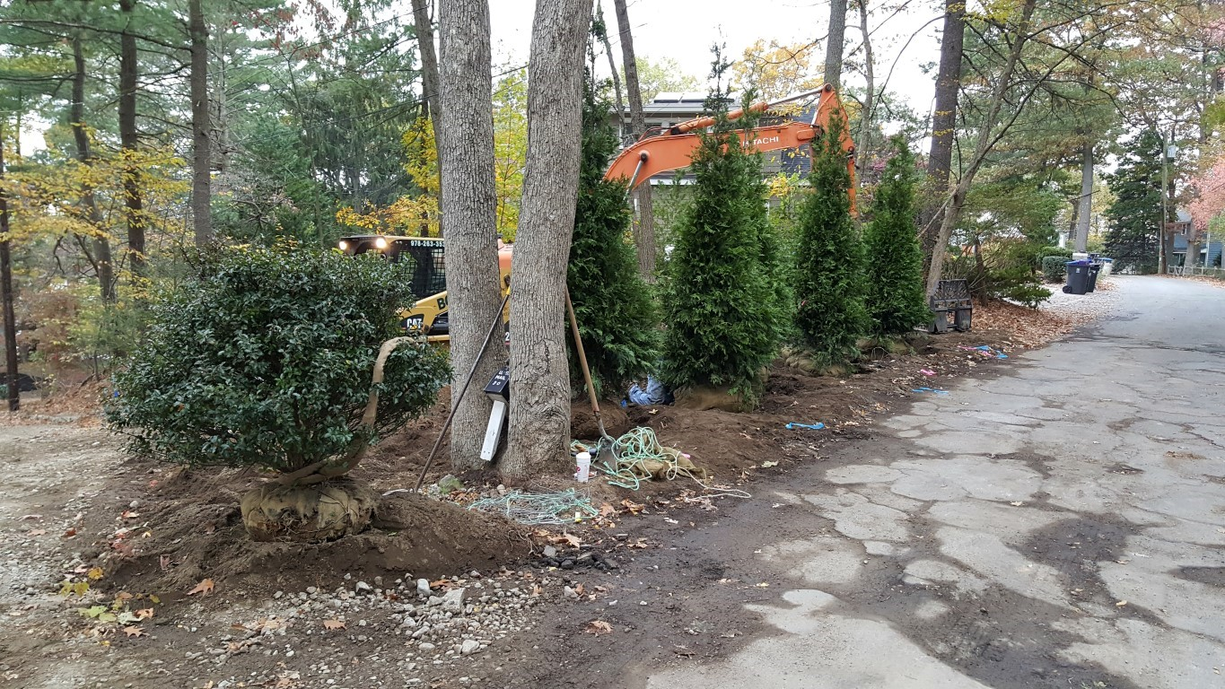 Tree Transplanting Middlesex County MA